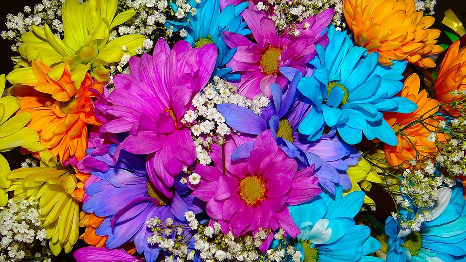 Daisy, Beauty, Color, Bright, Turquoise, Pink, Yellow