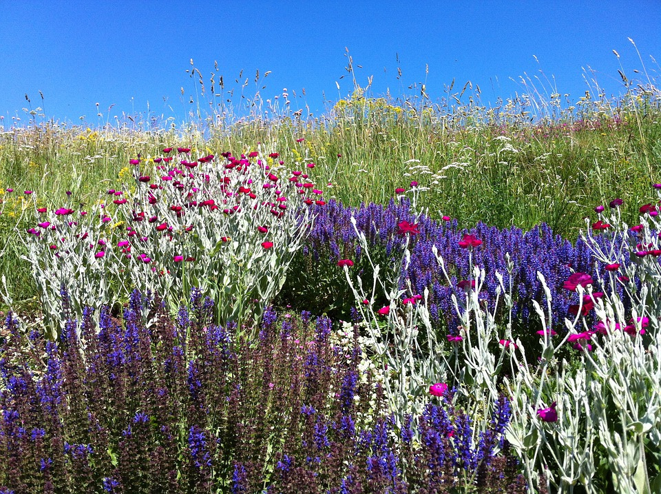 Flowers, Landscape, Color, Shades, Nature, Holiday