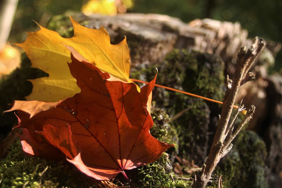 Foliage, Autumn, In The Fall, Colored, Forest, Color