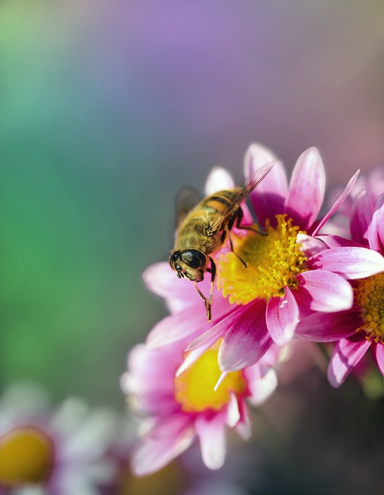 Flower, Flowers, Insect, Color, Colors, The Background