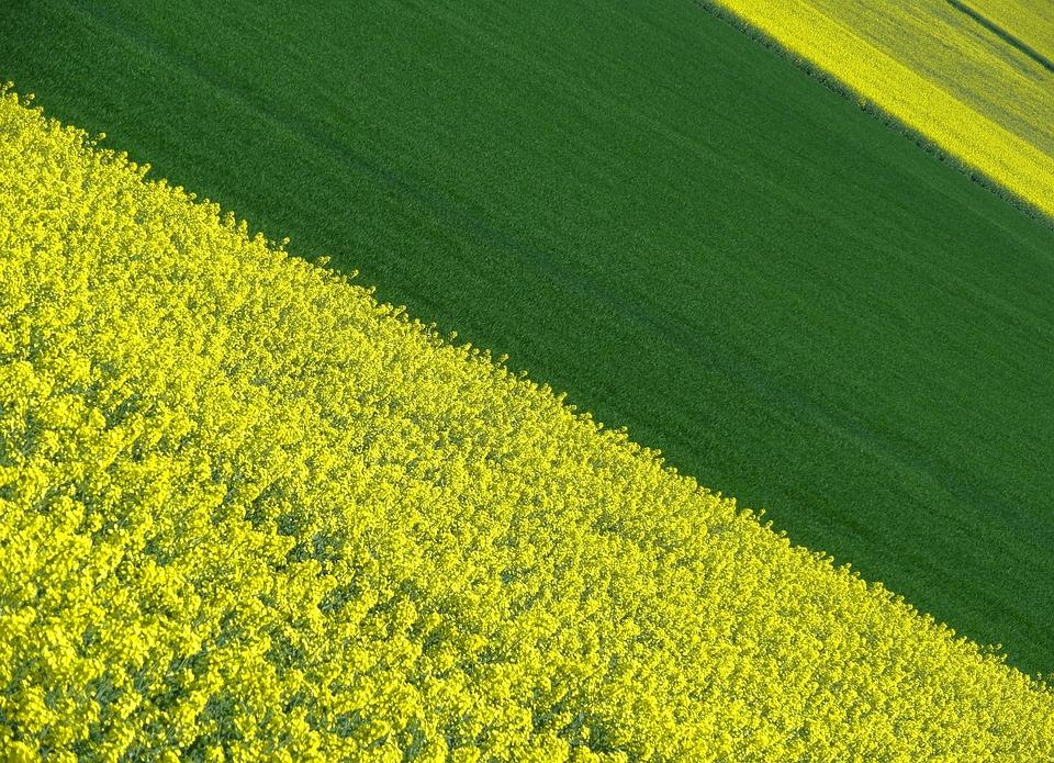 Landscape, Color, Field