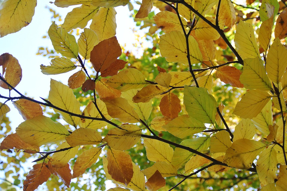 Autumn, Leaves, Color, Nature, Forest, Fall Foliage