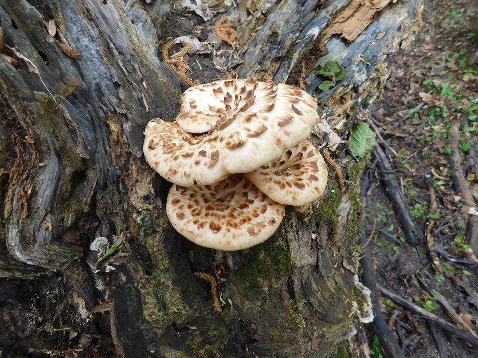 Forest, Natural, Mushroom, Color
