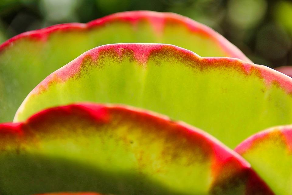 Leaf, Tropical, Color, Nature