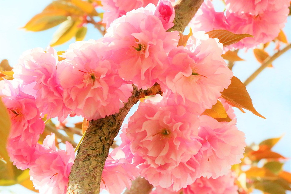 Flowers, Spring, Tree, Plant, Nature, Color, Pink