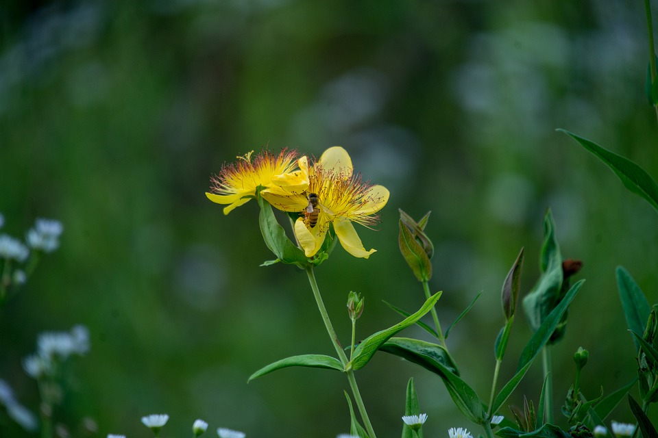 Wildflower, Yellow, Color, Nature, Bloom, Plant