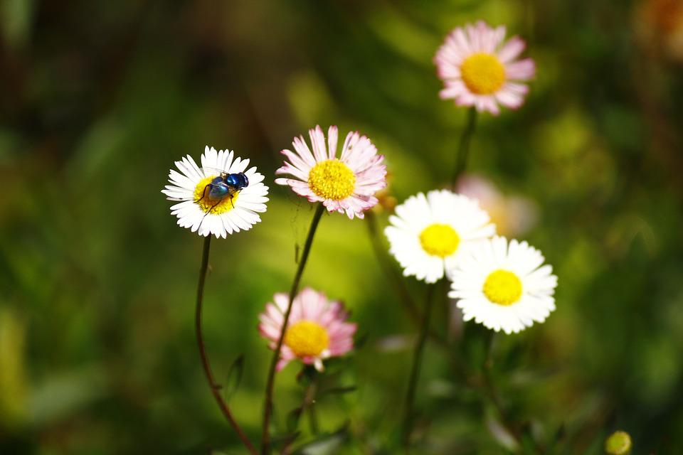 Flowers, Insect, Nector, Nature, Color, Blossom, Floral