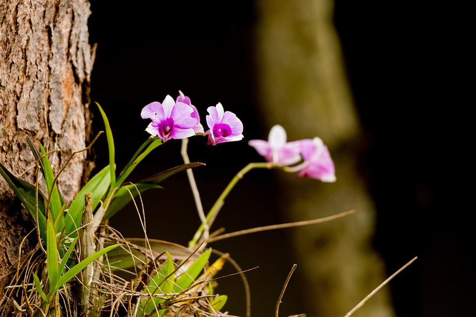 Flower, Nature, Plant, Petal, Summer, Color, Beautiful
