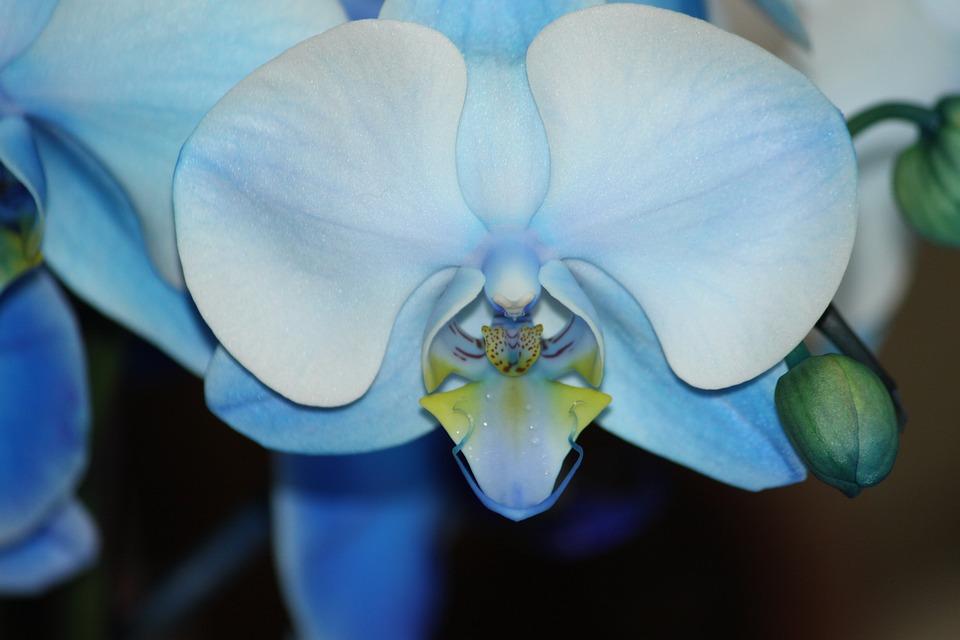 Flower, Nature, Plant, Color, Tropical