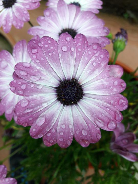 Flower, Rain, Nature, Plant, Garden, Color, Terry