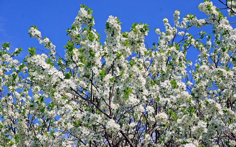 Spring, Apple Tree, Color, Sky