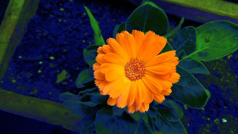 Flower, Orange, Color Splash, Nature, Colorful