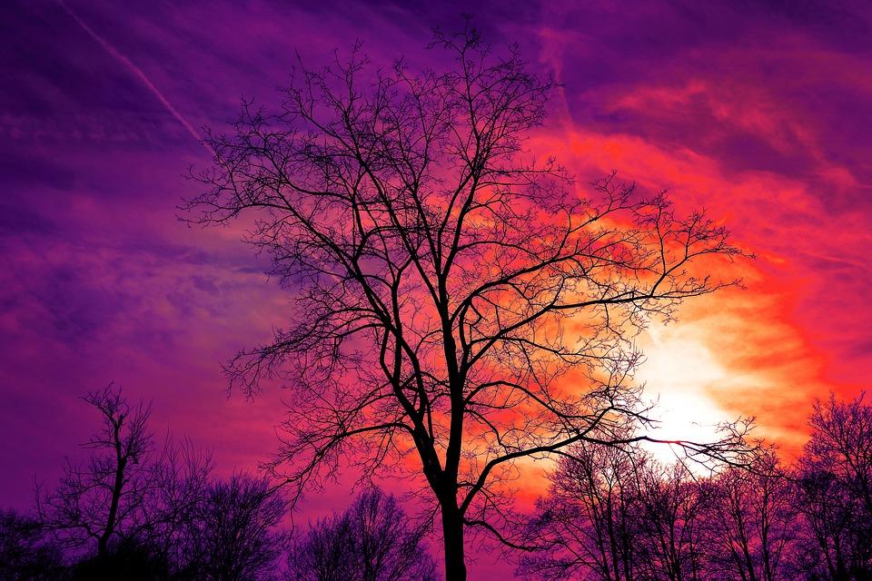 Tree, Bare Tree, Sunset, Sky, Sunset Sky, Color, Red