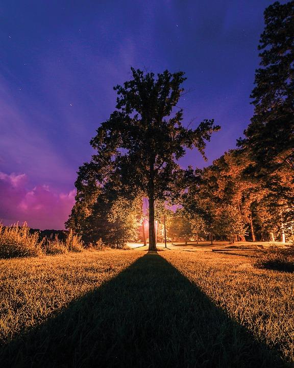 Tree, Silhouette, Tree Silhouette, Nature, Color