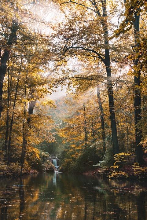 Lake, Landscape, Color, Trees, Mood, Sky, Light, Water