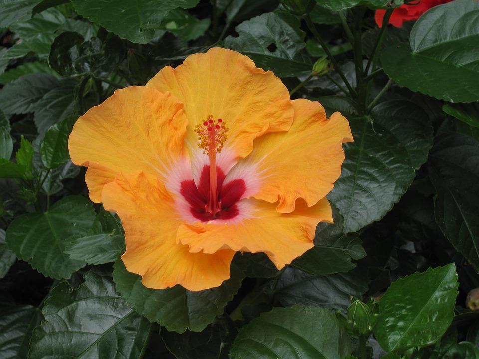 Flora, Nature, Leaf, Flower, Garden, Color, Tropical