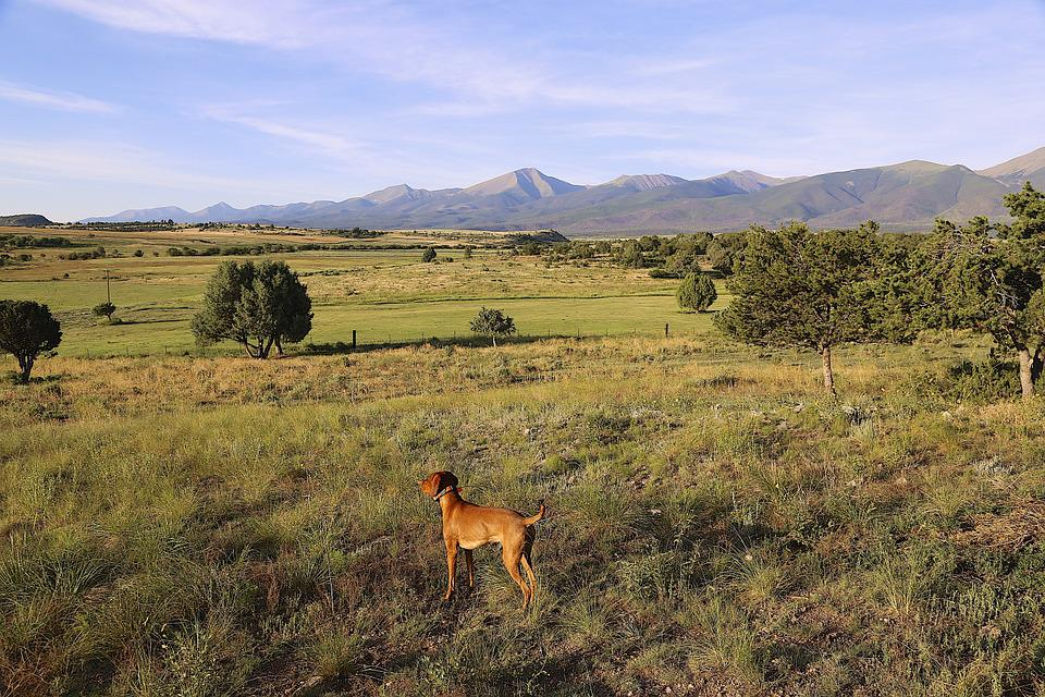 Dog, Colorado, Countryside, Vizsla, Summer, Sightseeing