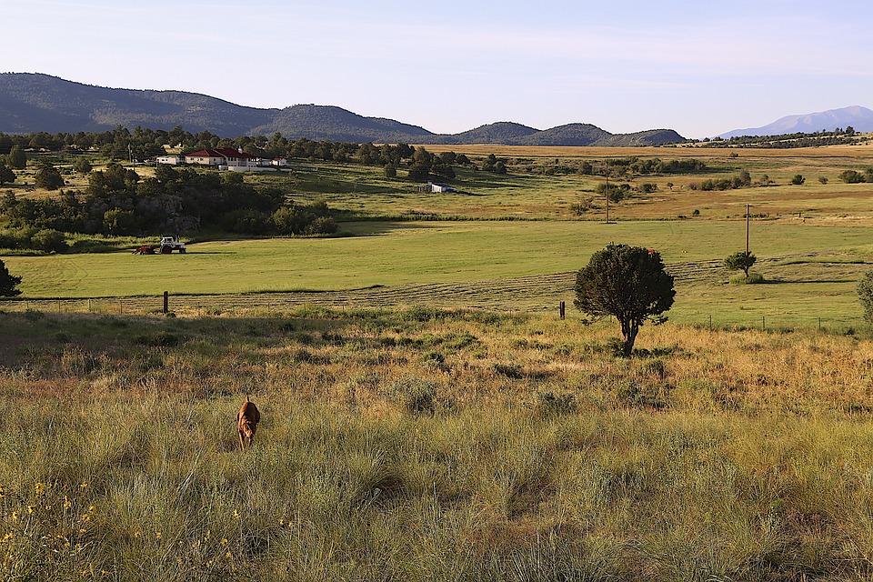 Colorado, Countryside, Vizsla, Summer, Sightseeing