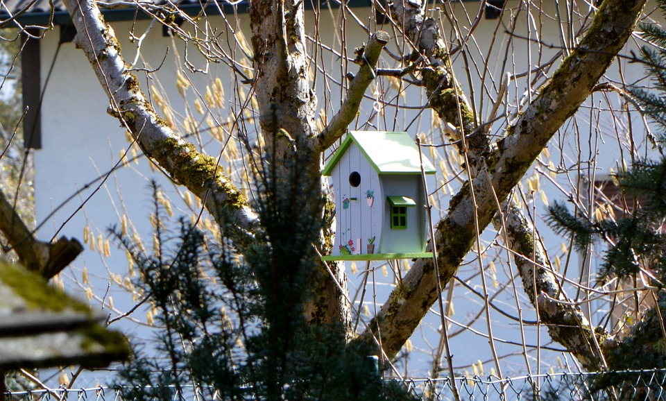 Aviary, Nesting Box, Tree, Garden, Colored