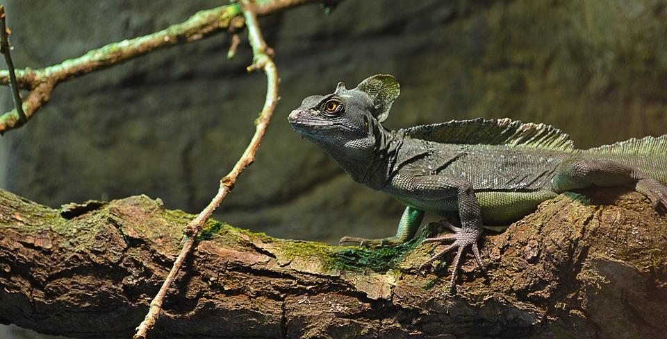 Lizard, Zoo, Colored, Reptile