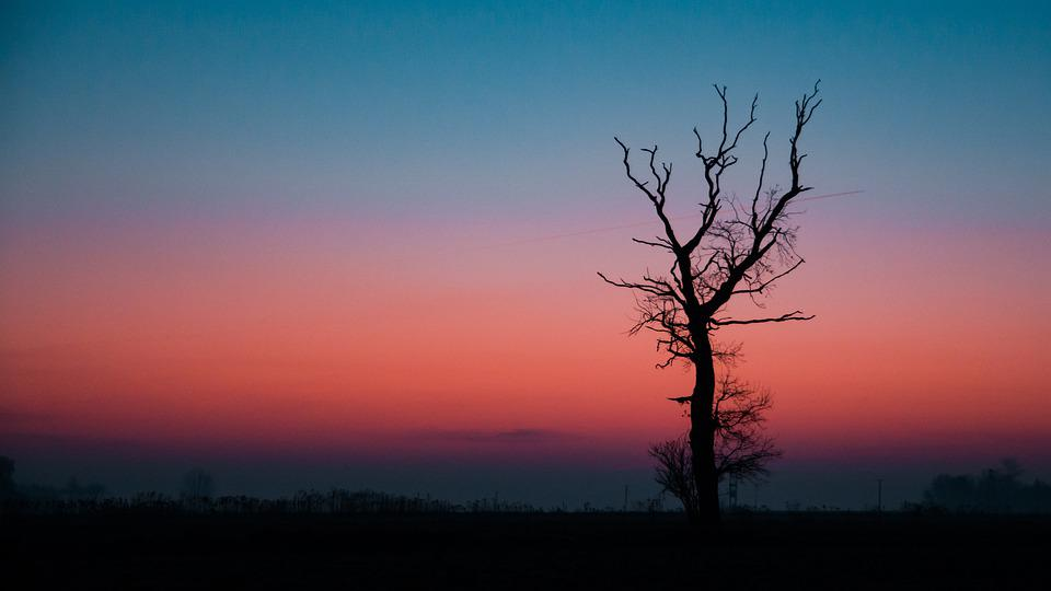Sunrise, Colored, Tree, Landscape, Colorful, Nature