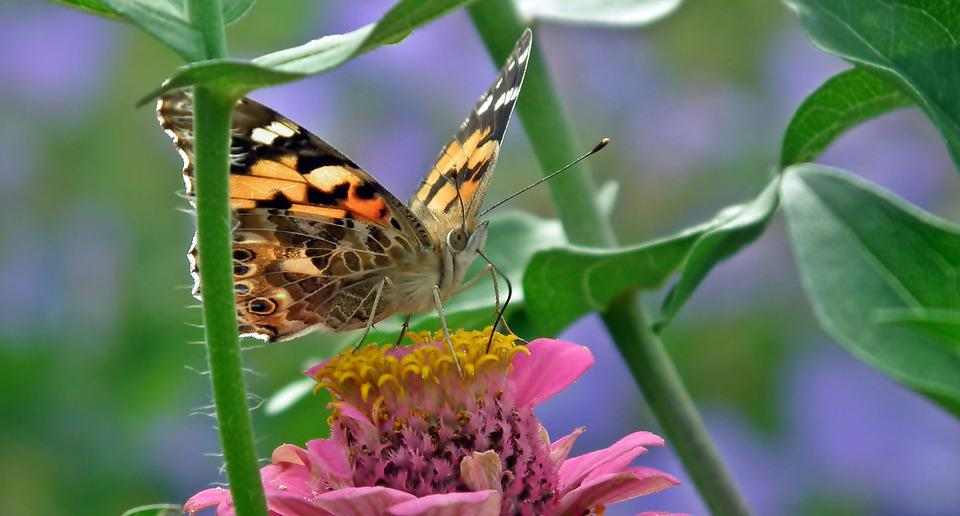 Butterfly, Colored, Insect, Nature, Wings, Summer