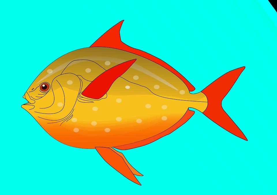 Fish, Water, Swim, Colorful, Swimming, Aquatic, Fins
