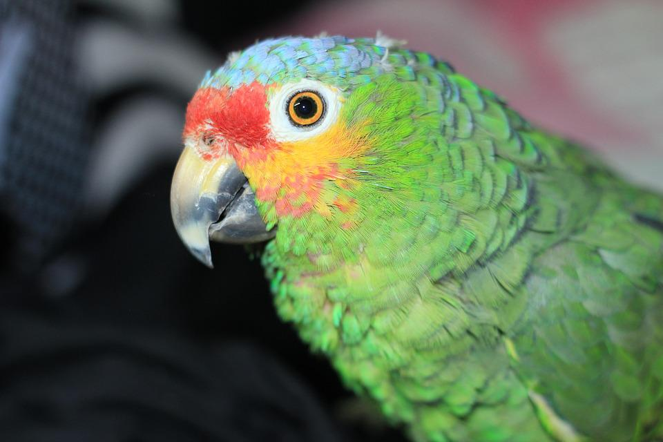 Parrot, Ara, Birds, Colorful, Plumage, Color, Eyes