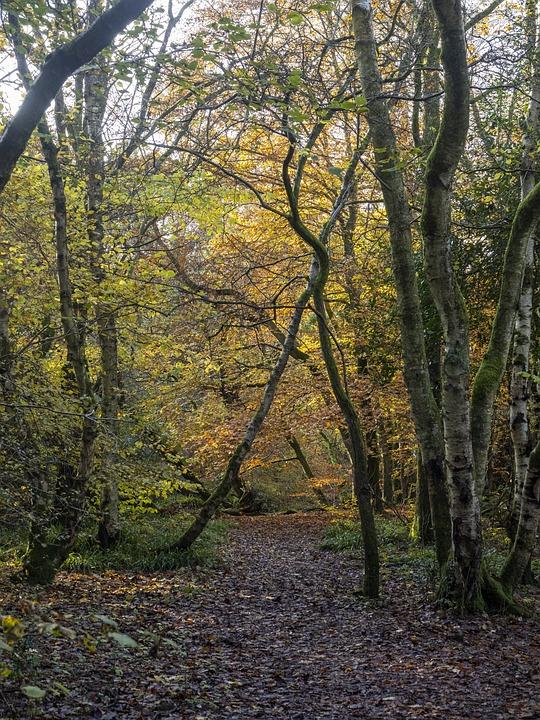 Autumn, Trees, Landscape, Leaves, Colorful, Atmospheric