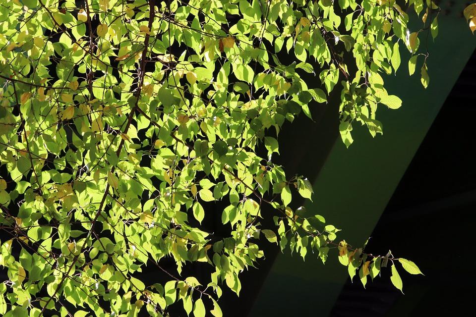 Blue, Blue Leaf, Autumn, Green, Plants, Colorful