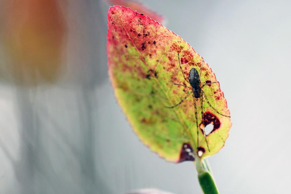 Macro, Autumn, Spider, Insect, Colorful, Close Up