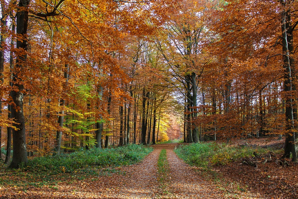 Autumn Forest, Beech Wood, Forest Path, Colorful