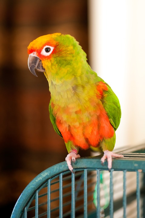 Free Photo Colorful Bird Cage Parrot Sun Conure Feather Max Pixel