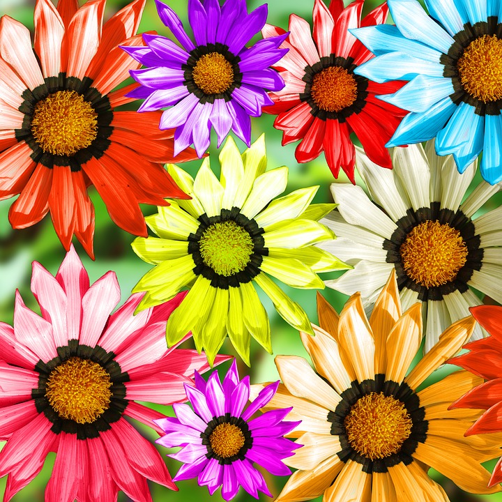 Gerbera, Plant, Flower, Colorful, Blossom, Bloom, Close