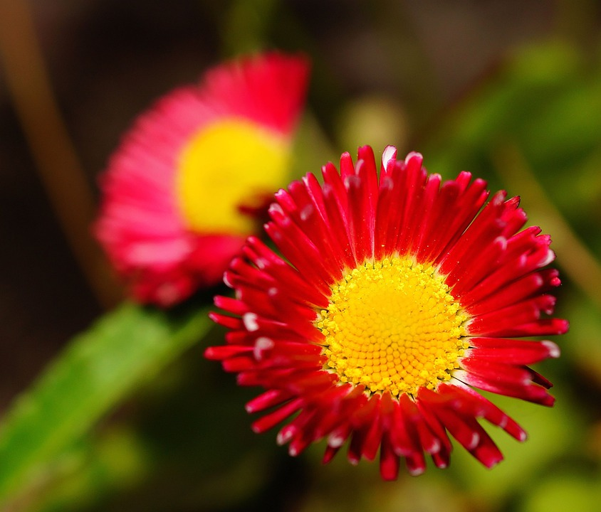 Flower, Blossom, Bloom, Red, Yellow, Colorful, Sweet
