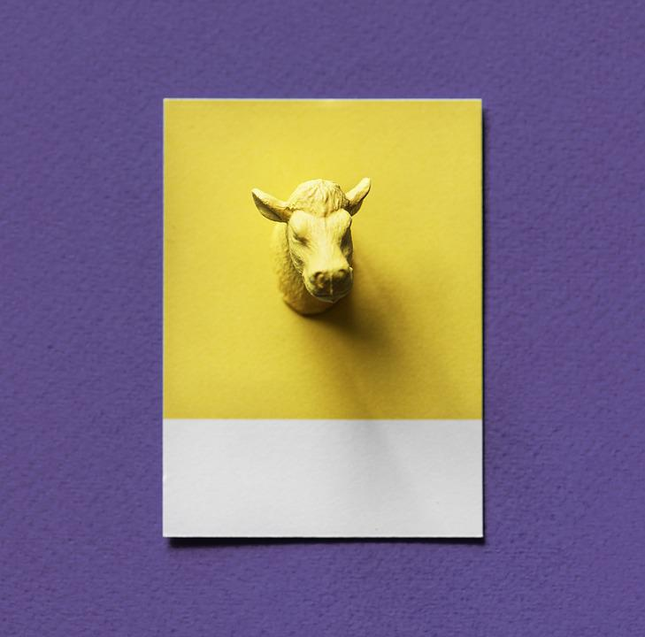 Abstract, Animal, Bull, Head, Card, Colorful, Cow
