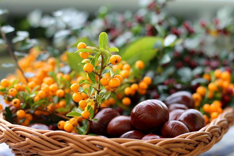 Chestnut, Sea Buckthorn, Basket, Autumn, Colorful