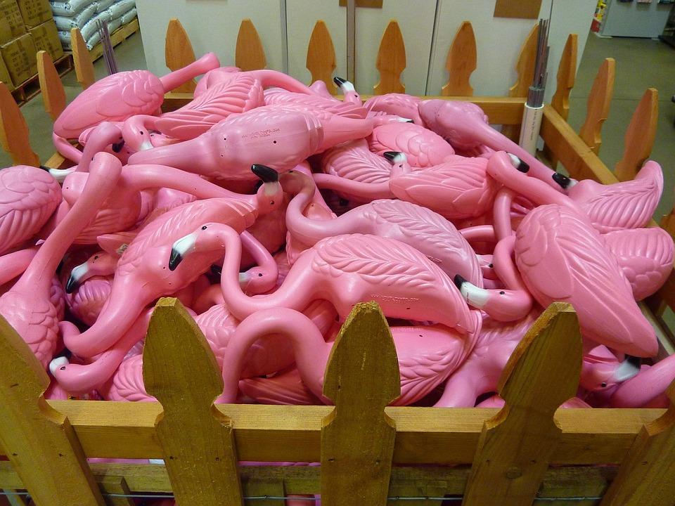 Pink, Flamingo, Bird, Color, Macro, Close-up, Colorful