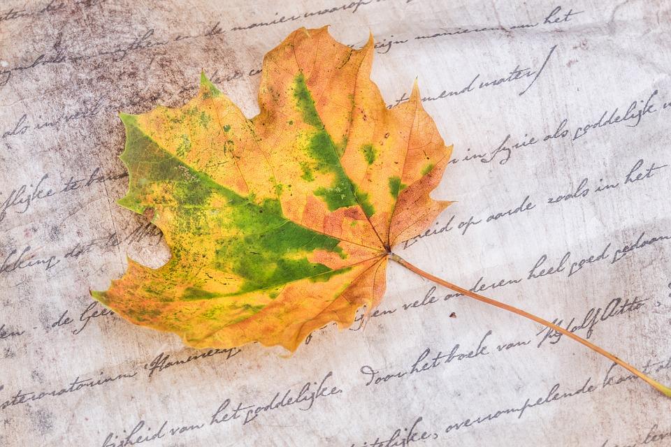 Autumn, Sheet, Leaves, Nature, Season, Colorful, Color