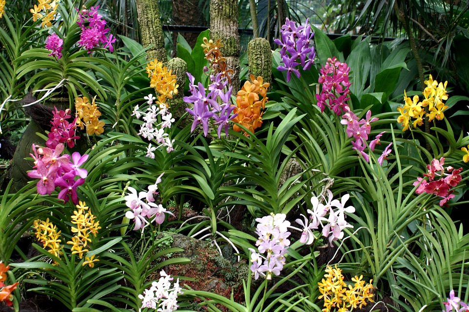 Elegant Flowers, Flower Bed, Garden, Colorful, Tropical, Exotic