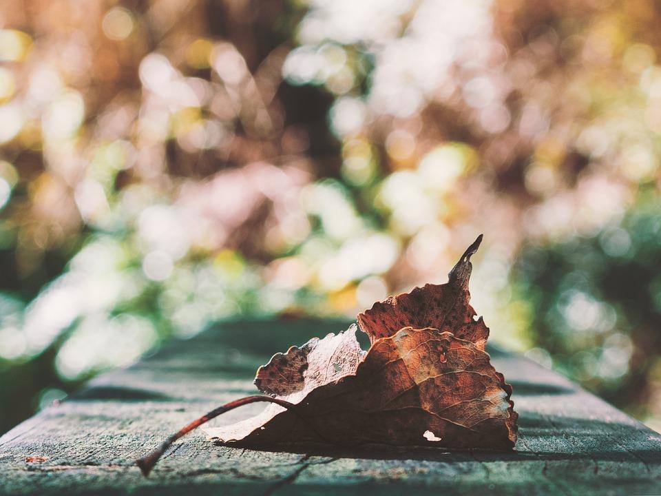 Leaf, Autumn, Leaves, Nature, Fall, Colorful, Color