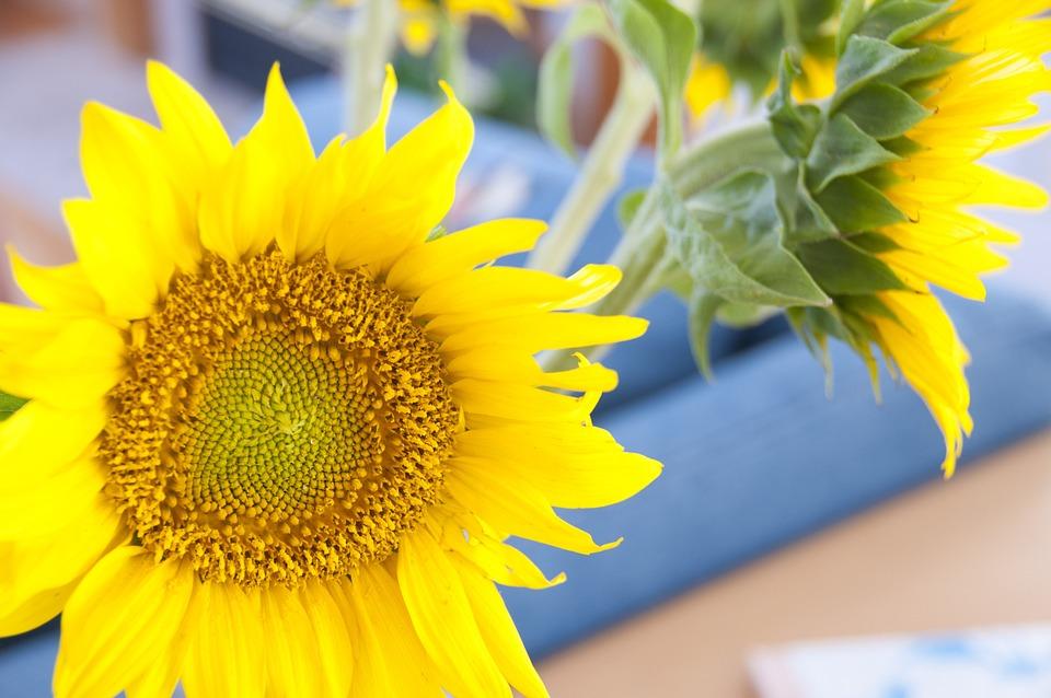 Flower, Sunflower, Yellow, Fresh, Colorful, Closeup