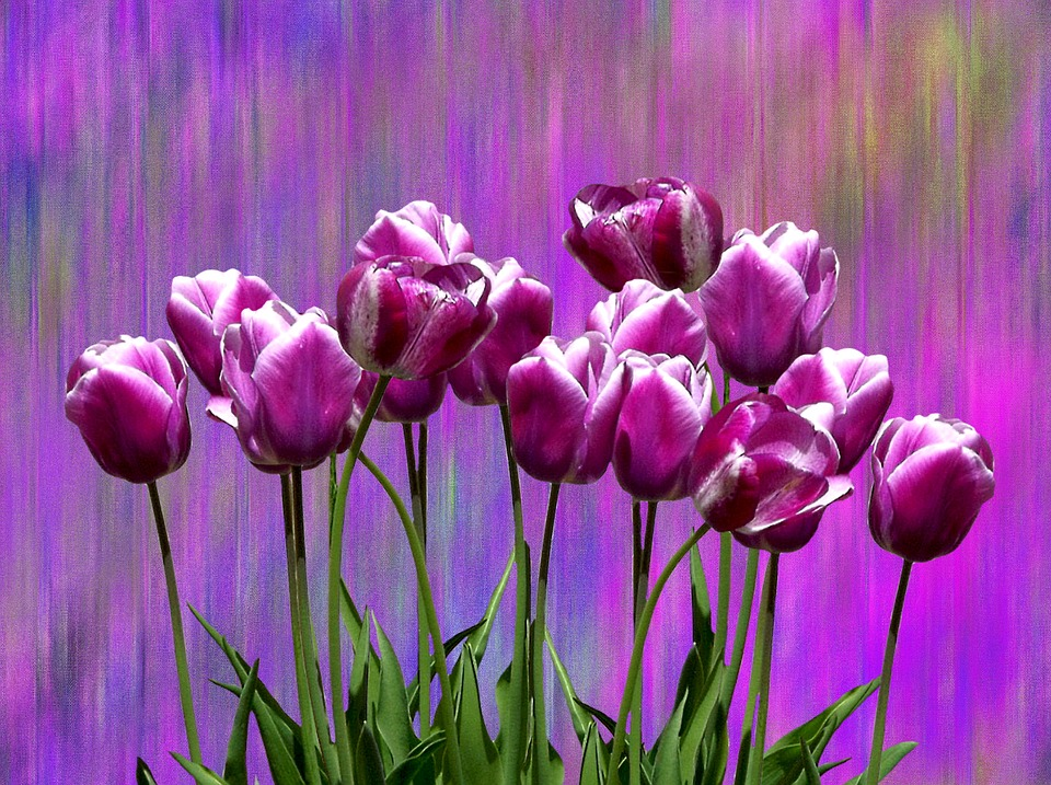 Tulips, Spring, Easter, Flower, Nature, Colorful, Plant