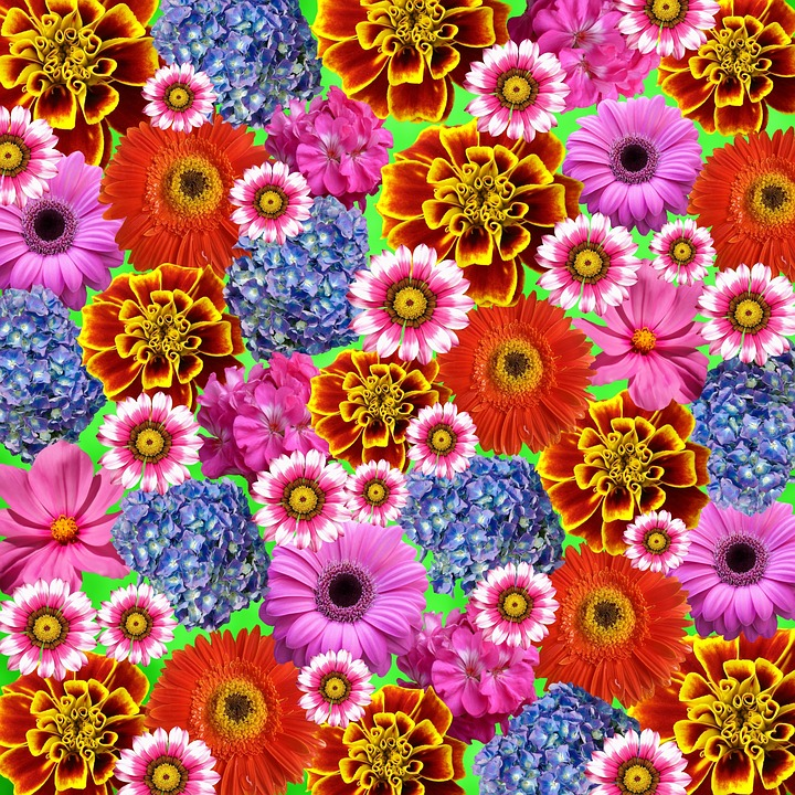 Flower, Colorful, Summer, Nature, Colorful Flowers