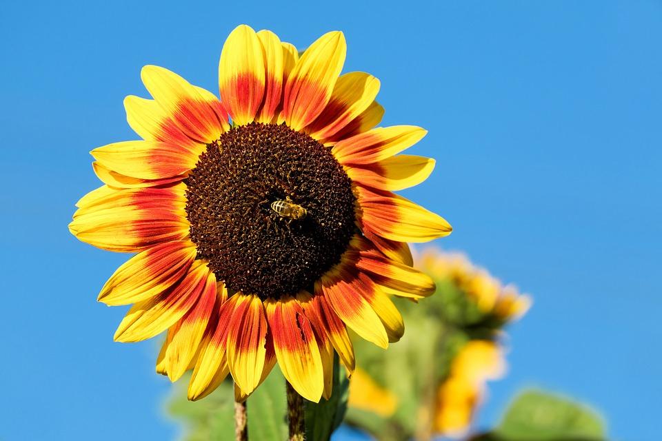 Free photo Colorful Flower Sun Flower Orange Flowers Yellow - Max Pixel