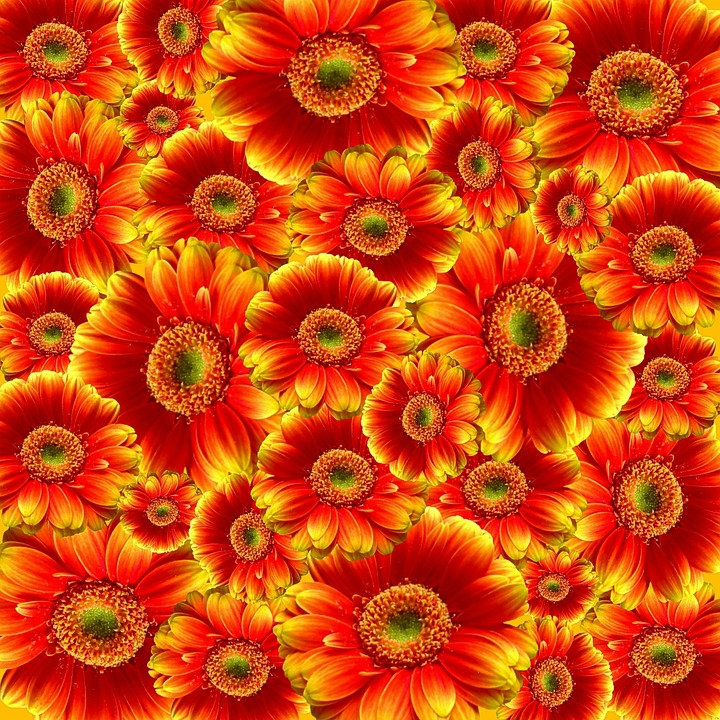 Gerbera, Flowers, Nature, Plant, Colorful, Cut Flowers