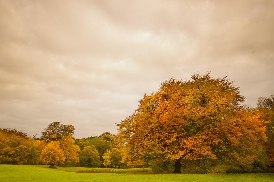 Park, Foliage, Trees, Autumn, Fall, Colorful, Nature