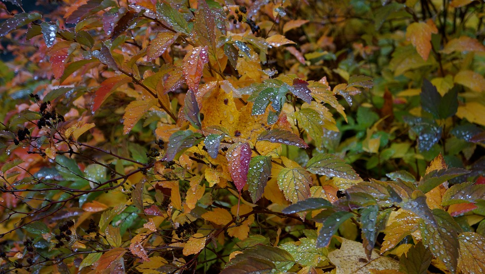 Autumn, Fall Colors, Colorful Foliage, Mixed
