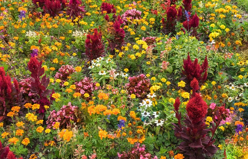 Garden, Flowers, Colorful, Nature, Green, Summer