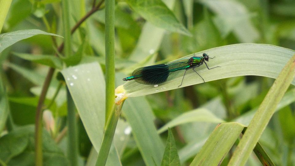 Dragonfly, Insect, Close-up, Colorful, Green-blue